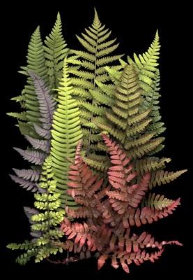 Ferns - scanner photography by Ellen Hoverkamp
