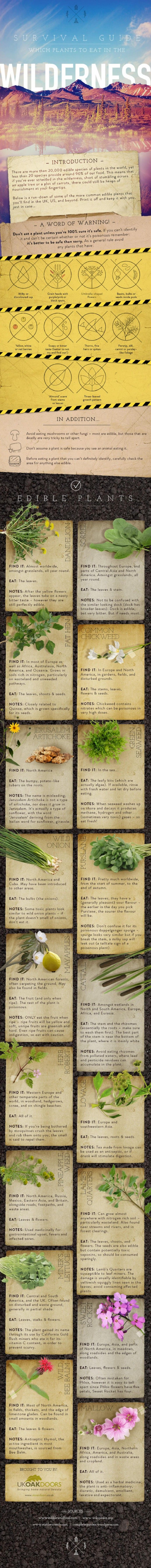 Be Prepared - Learn About Common Edible Plants In the Wild with This Visual Guide