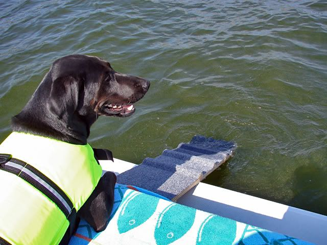 Pontoon Boat Dog Ladder for Smaller Dogs Page: 1 - iboats ...