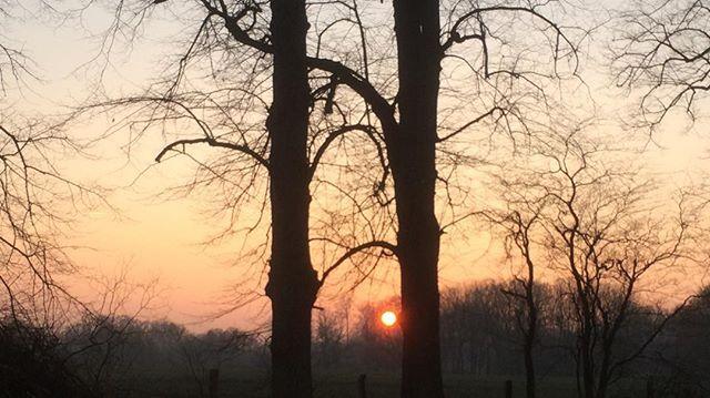 Um 17:00 Uhr heute #Eiseskälte. #rotehände  Der Sonnenuntergang 🌅 entschädigte alles #nature #nature_brilliance #naturelove #sunrise_sunsets_aroundworld #sunset #trees #tree #treestagram #travel #traveler #travelgram #igersdaily #igersworldwide #igerseurope #alemania