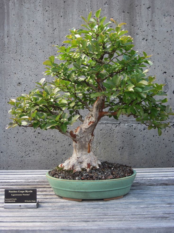 Suggestions For Bonsai Growing in Dozier, Alabama