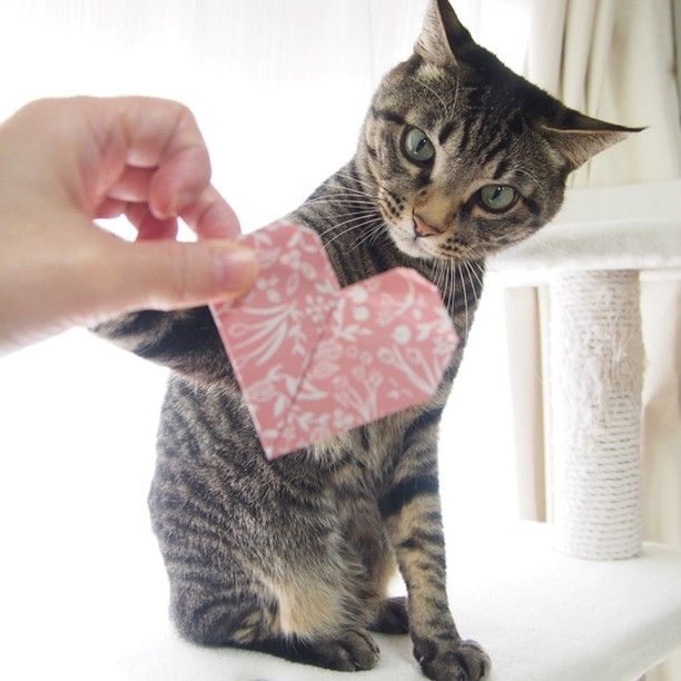 Give me that, Mom! Your love is all mine!! それちょ~だい♪ おかーしゃんのLOVEは全部ボクのものだよ♥  #cat #neko #catsofinstagram #origami #BeOurValentinePet2016 #cat2see#catlovers#cat_features#catworldwide#tabbycat#excellent_cats#catstagram#nyanstagram#lovemeow#ig_catclub#World_kawaii_cat#instacat_meows#TopCatPhoto#igbest_cats#cutepetclub#igcutest_animals#topcatoftheday#cats_of_world #excellent_kittens#kittens#kitten#lovekittens#kittycat#TheDailyKitten
