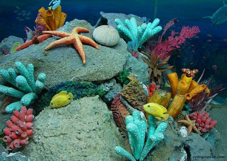 Undersea Life | Underwater | Its My Life