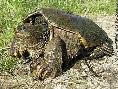 What Do Turtles Eat: Human Foods That Pet Turtles Eat ...