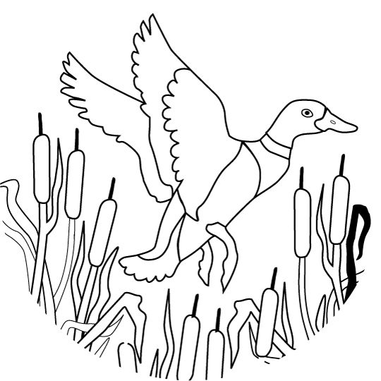 9 best kids crafts images on pinterest duck dynasty for Mallard coloring page