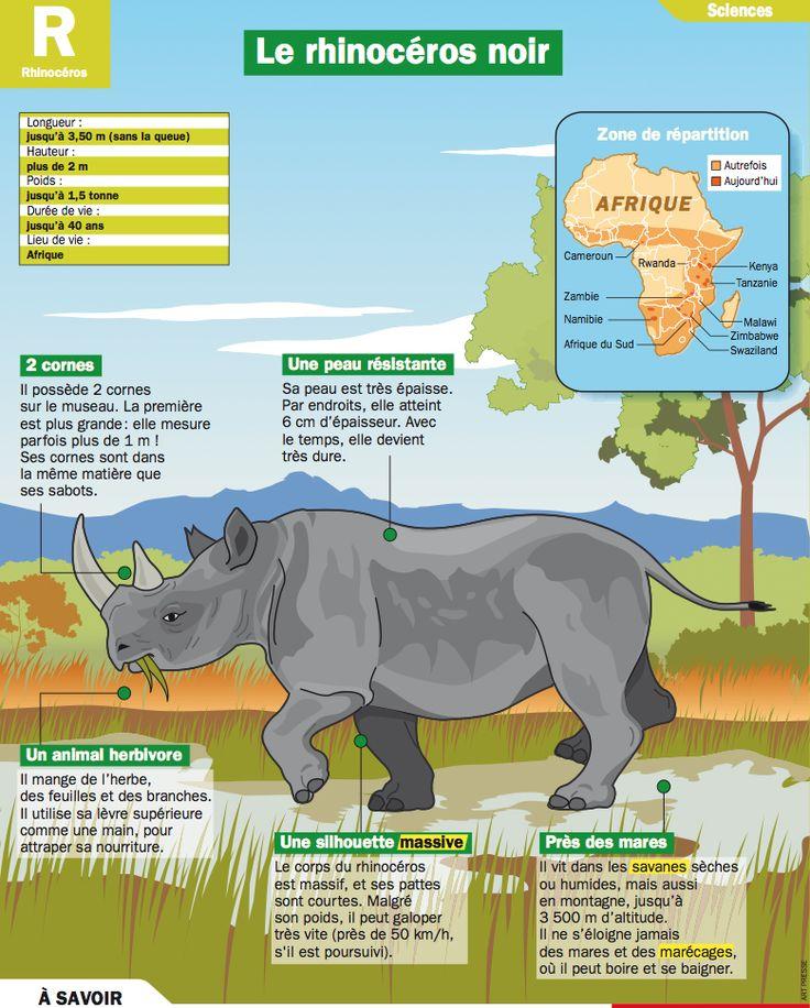 Fiche exposés : Le rhinocéros noir                                                                                                                                                                                 More