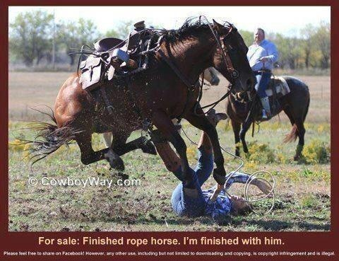 Roping horse for sale... Anyone want to buy a horse!! Lol!