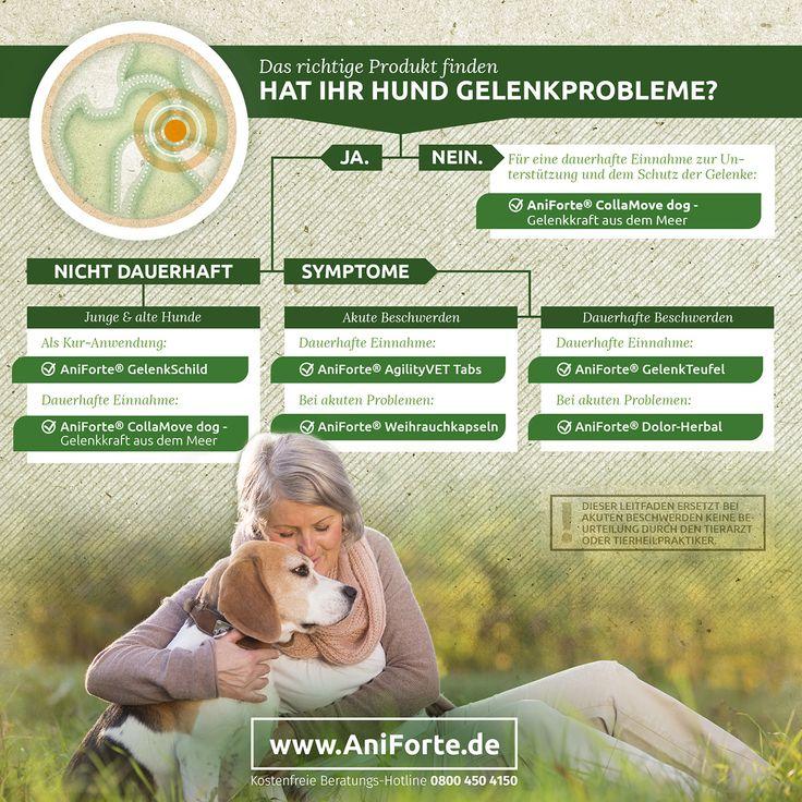 Arthrose ist eine der häufigsten Erkrankungen des Bewegungsapparates beim Hund. Dabei zählt sie schon längst nicht mehr zu einer Alterserscheinung, sondern betrifft auch junge Hunde. Hier liegen mit bis zu 50% eine genetische...