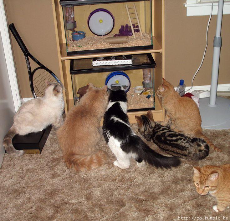 Les chats et la souris