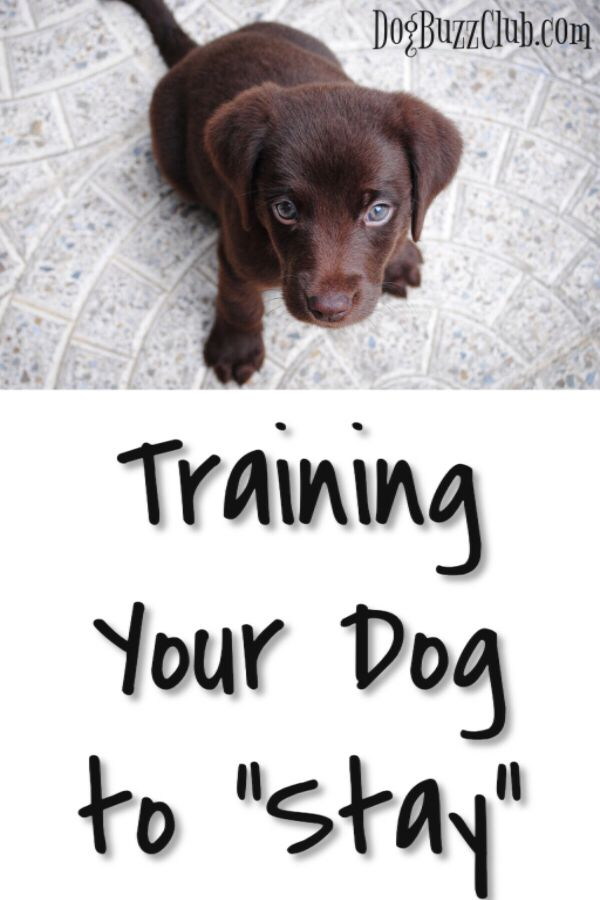 Training Your Dog How To Stay Is Extremely Helpful If You Want To