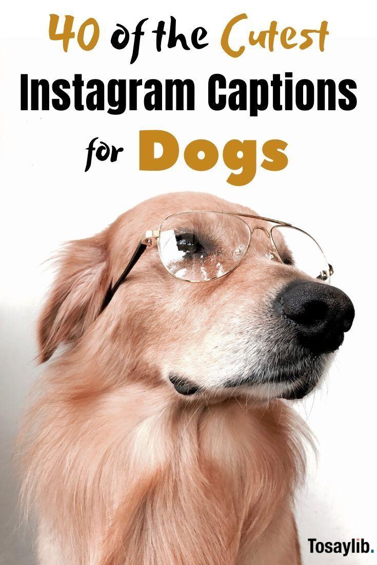 Instagram Captions For Dogs Dog Instagram Captions Cute Instagram Captions Cute Dog Quotes