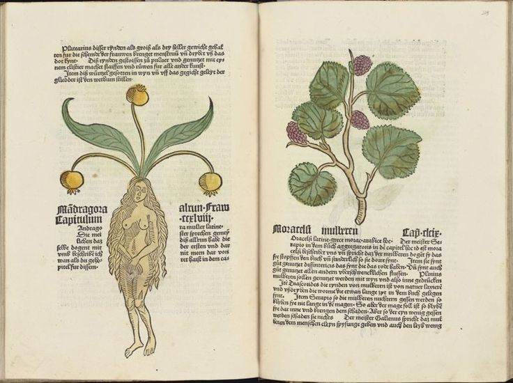 Nemes Csaba: Az orvoslás és a test újjászületése a reneszánsz korában