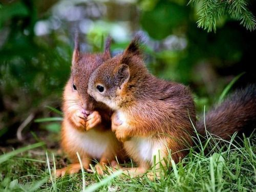Irresistível E Adorável Natureza!por Depósito Santa Mariah