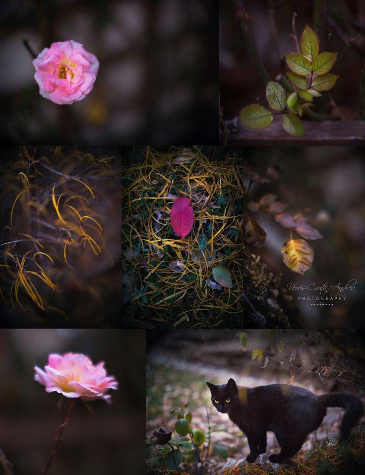 autumn, colours, , csutafoto