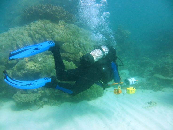 We've dived into the waters of the Pilbara to check out reef health. Sadly we found evidence of coral bleaching due to recent marine heatwave, but on the upside reefs close by showed much less damage and will continue to contribute to a healthy ecosystem.
