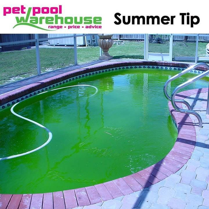 "Green algae is a common swimming pool problem, which may appear as a greenish growth on the floor and walls of a swimming pool, a green tint to the pool water, or greenish material suspended in the pool water. The only swimming pool chemical that will kill an algae growth is chlorine based swimming pool ""shock"".  Shock is a granular form of highly concentrated chlorine, which quickly raises the chlorine level of the swimming pool water. The elevated chlorine level makes the pool water…"