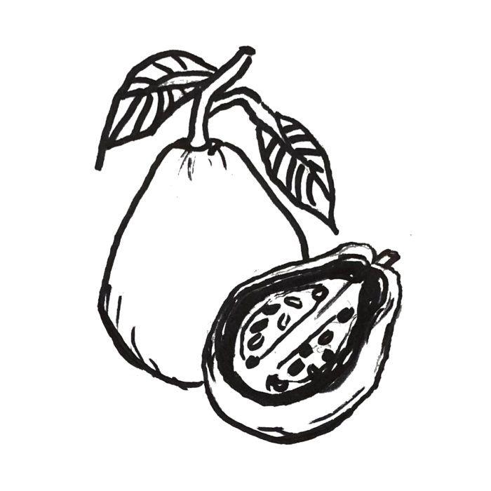 Pink Guava Drawing Guava Drawing Pink Guava Drawing Illustrations