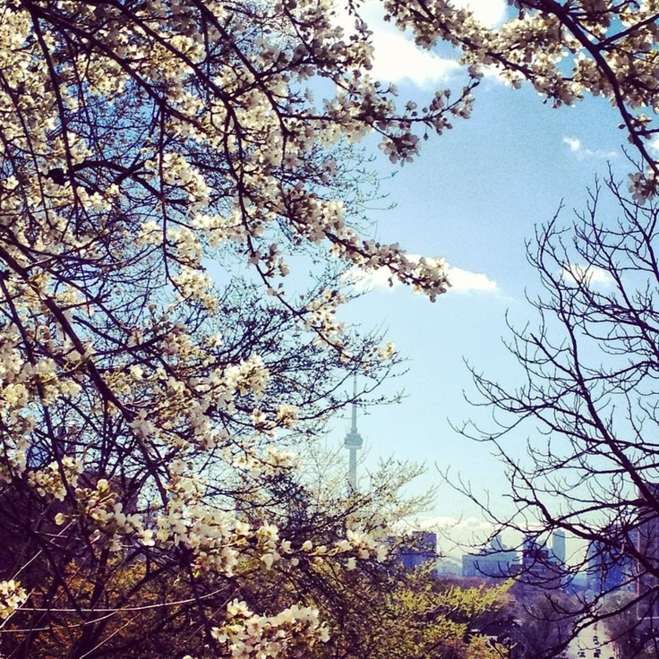 The City through the Cherry Blossoms  via buttersugargloss blog