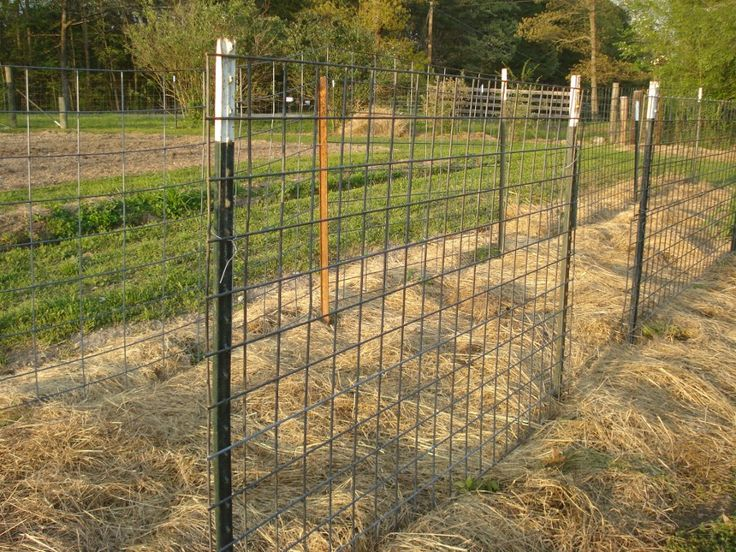Inexpensive Deer Fence