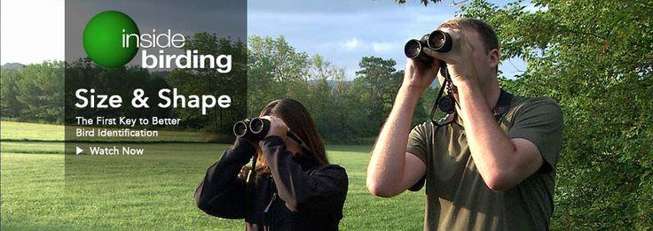 ***Help develop a Bird ID tool! watch videos for kids about birding. fun