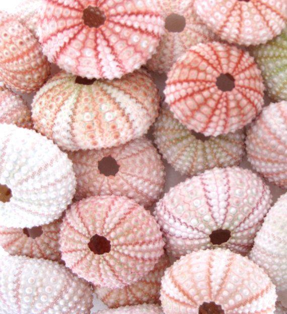 "10 Pink Sea Urchins (1.75"" - 2"") *Top Quality* Light to Dark Pink - Seashell/Nautical/Beach Decor/Beach Wedding Decor"