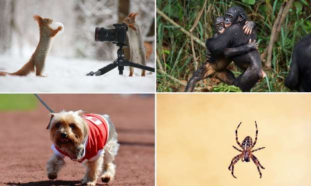 #BrainyBunch: The #Smartest #Animals in the #World. Dbl-click pic, then click ➡ for additional pictures, information. #Interesting!