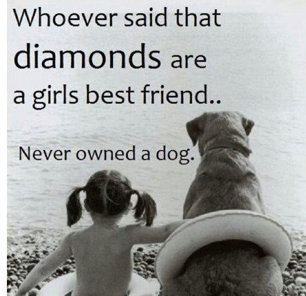 never owned a dog