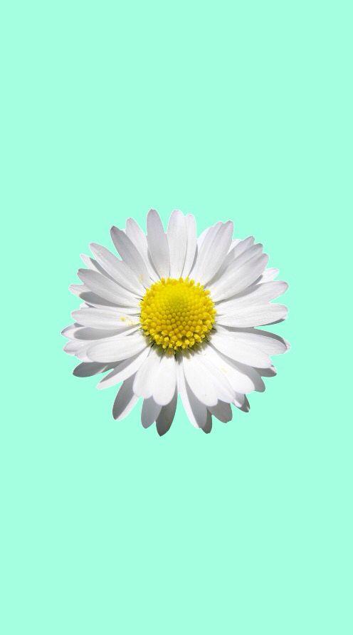 Best 25+ Mint wallpaper ideas on Pinterest | Mint green wallpaper, Watercolor background and ...