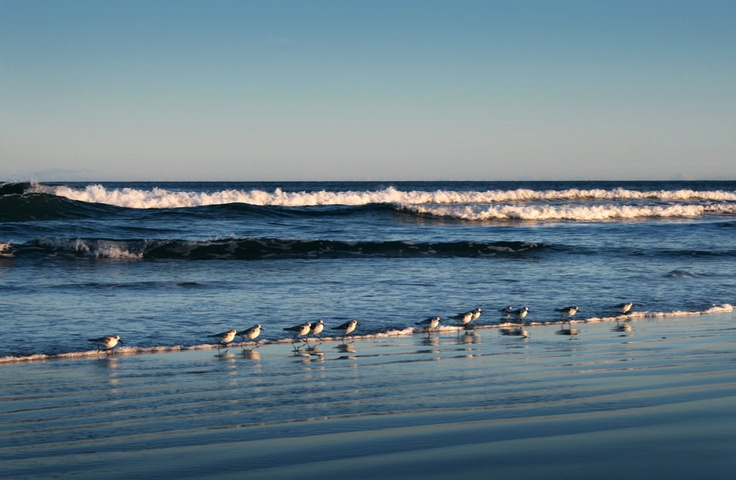 Whitepoint Beach, Plovers