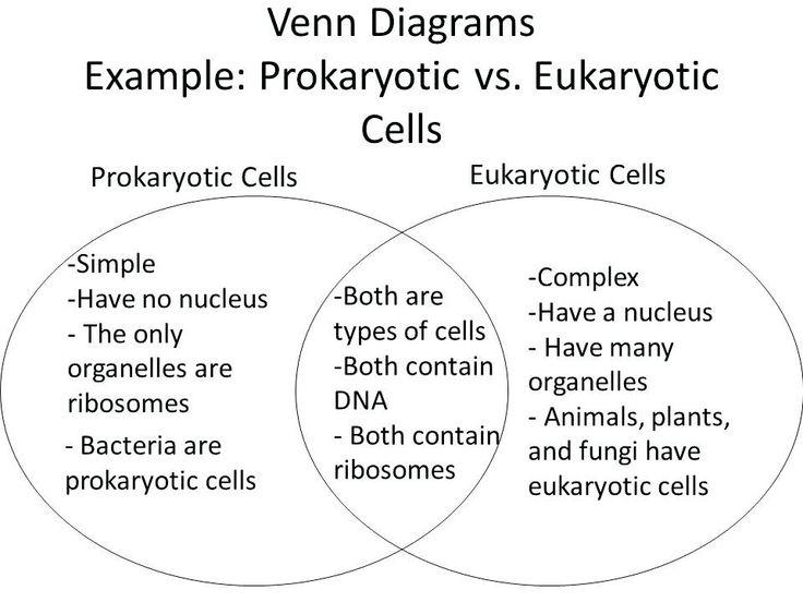 Plant Animal Cell Venn Diagram Luxury Simple Animal and ...