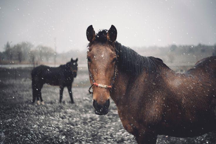 I miss winter =( by Nacho Zàitsev https://500px.com/photo/212226951/i-miss-winter-by-nacho-z%C3%A0itsev?ctx_page=2&from=popular