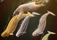 Tim Pitsiulak - Bear Hunting Beluga 30 x 44 Coloured pencil on paper