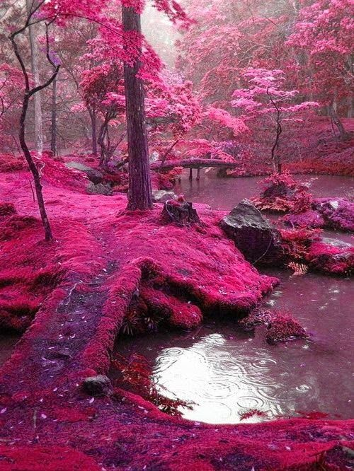 Dreamy nature , Pink Moss Bridges, Ireland