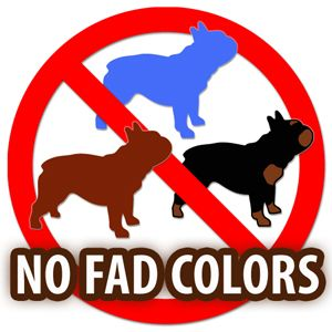 French Bulldog Breeder Warning Signs, Part One - Fad Colors