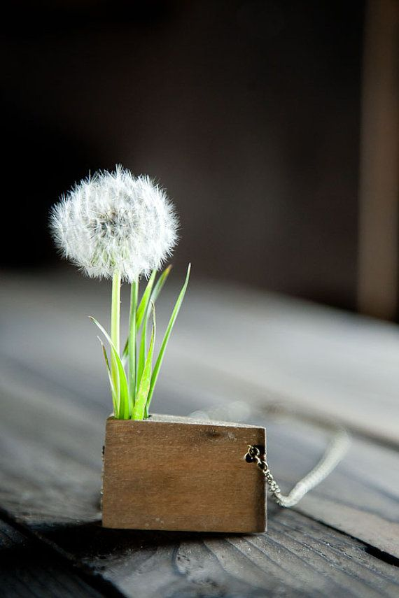 via tumblrNature Wood, White Flower, Dreams, Little Gardens, Weed, Beautiful, Necklaces, Dandelions, Dandy