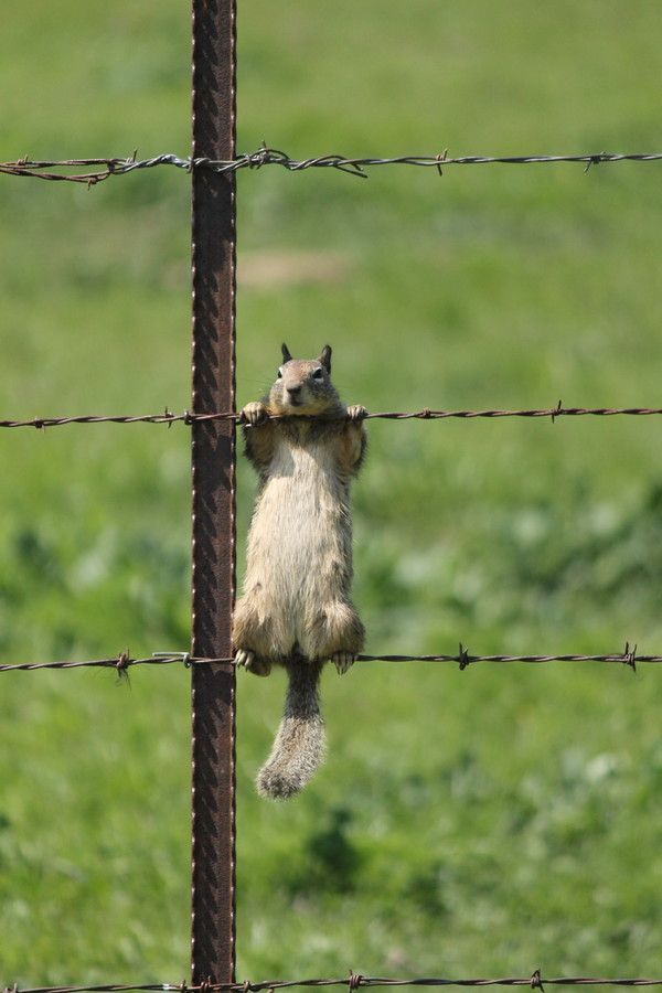 """They say the grass is greener on the other side of the fence, I wonder if the acorns are better too!"" Lol looks like that's what he's thinking anyway!"