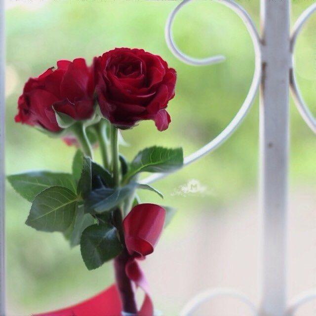 خلفية من حساب A Aisha87 A Aisha87 A Aisha87 خامات خلفيات للتصميم مخطوطه مخطوطات للتصاميم سكرابز باترن صو Beautiful Flowers Flowers Rose