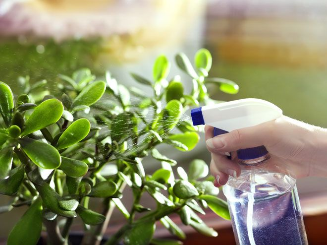 7 home remedies for aphids