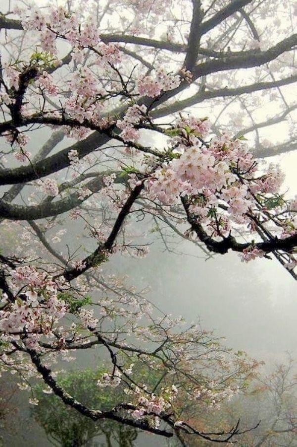 F7fb94a7 Fe7c 4098 Babc 17ec5ee083a1 Jpg 600 901 Blossom Trees Beautiful Nature Spring Blossom