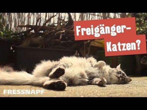 Freiganger Katzen Balkon Und Garten I Fressnapf Youtube