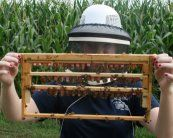 Online bee keeping lesssons, among other good things...