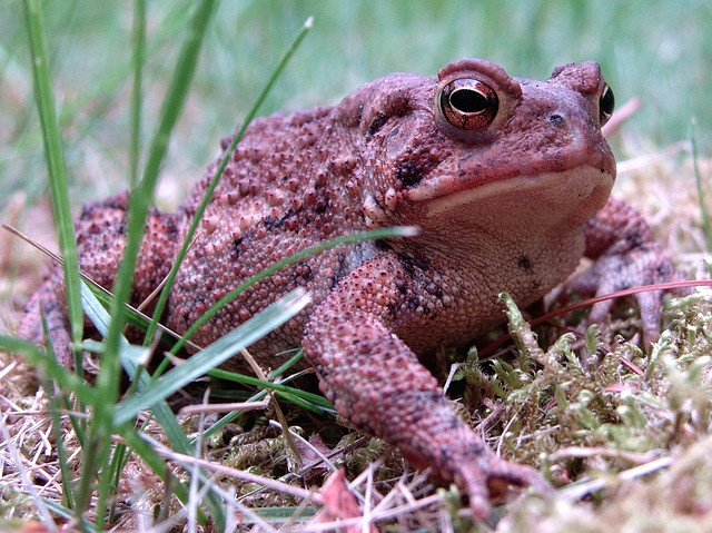 Surinam Toad Gross
