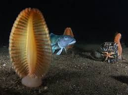 Image result for colourful sea plants