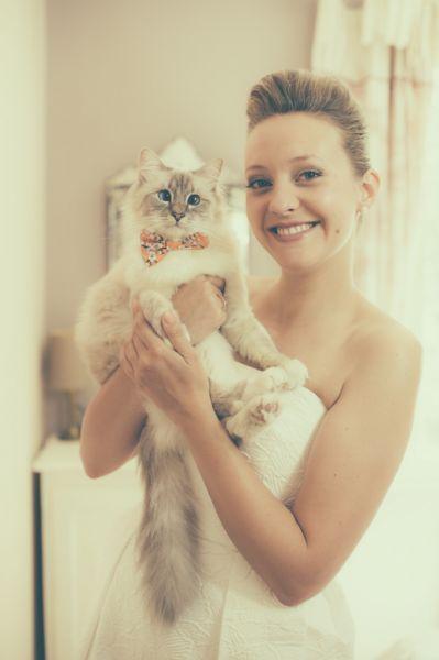 Les chats les plus adorables vus à des mariages ! Bow tie par RHC Pets