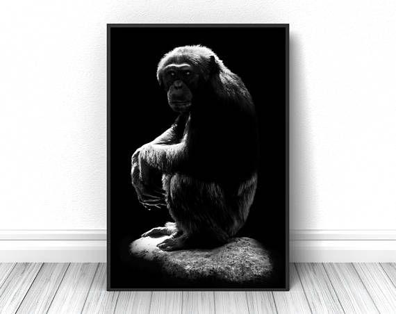 Creative Chimpanzee Print, Black and white animal fine art photography, Living room wall decor, Studio sketch poster, Wild nature photo  #monkey #blackandwhite #blackandwhitephotography #wildlife #print #poster #fineart #art #creative #unique #fineartphotography #fineartprint #wallart #livingroomdecor #walldecor #bedroomdecor