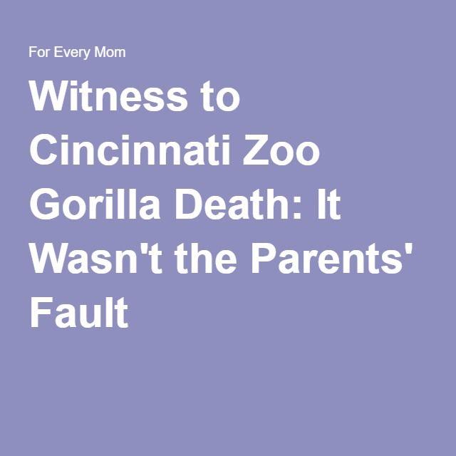 Witness to Cincinnati Zoo Gorilla Death: It Wasn't the Parents' Fault