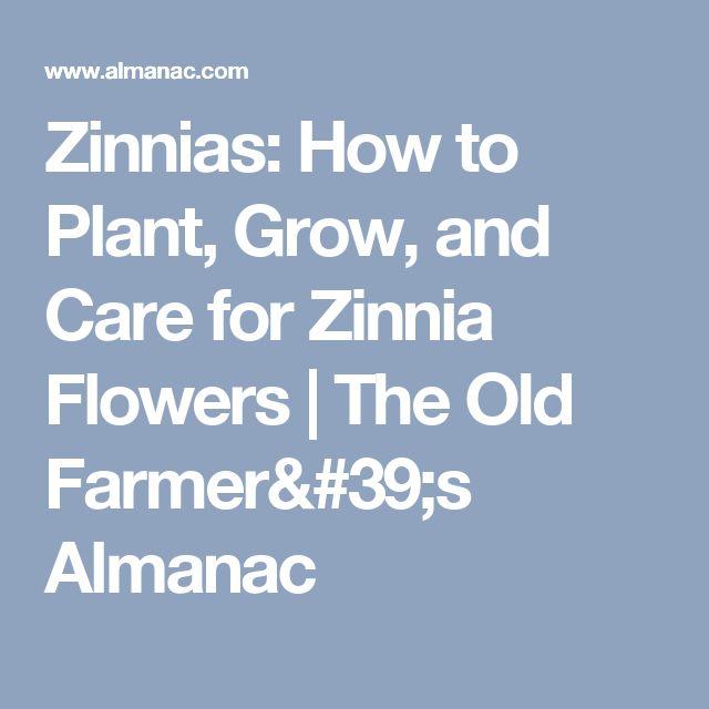 Zinnias: How to Plant, Grow, and Care for Zinnia Flowers | The Old Farmer's Almanac