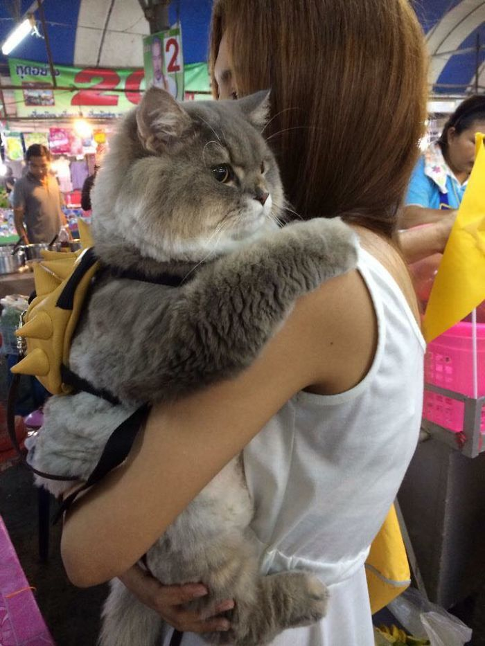 Have you ever seen a cat that was so fluffy that it looked almost fake? If not you haven't seen Bone the cat from Thailand yet.    Not only is this cat fluffy but he is practically