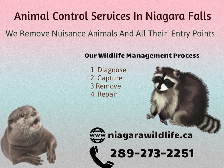 Animal Control Services In  Welland