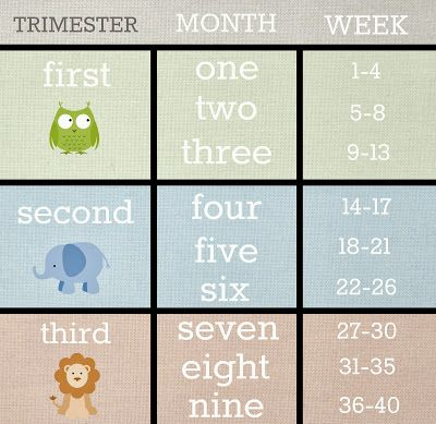 Weeks - months - trimester conversion chart for pregnancy.  Leap! ...and the Net Will Appear: Baby Deux - Weeks 21 and 22